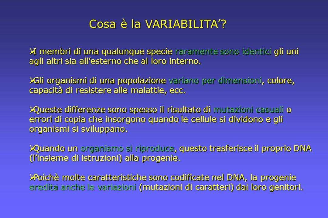 Cosa è la VARIABILITA? I membri di una qualunque specie raramente sono identici gli uni agli altri sia allesterno che al loro interno. I membri di una