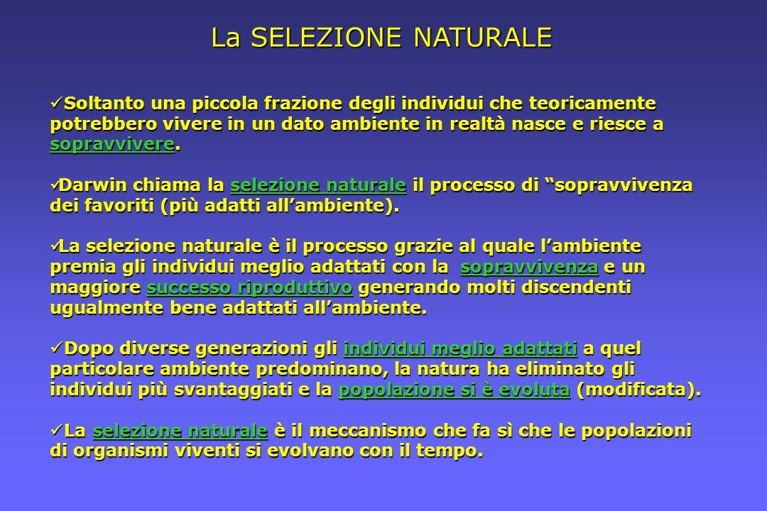 La SELEZIONE NATURALE Soltanto una piccola frazione degli individui che teoricamente potrebbero vivere in un dato ambiente in realtà nasce e riesce a