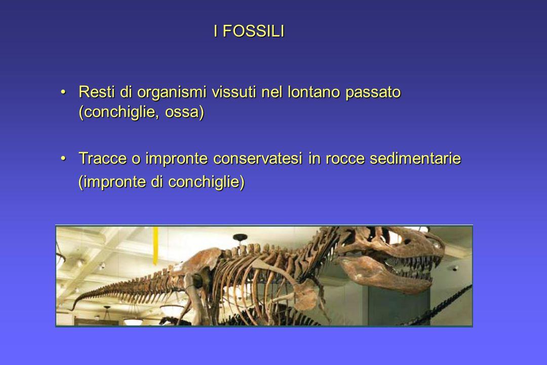 I FOSSILI Resti di organismi vissuti nel lontano passato (conchiglie, ossa)Resti di organismi vissuti nel lontano passato (conchiglie, ossa) Tracce o