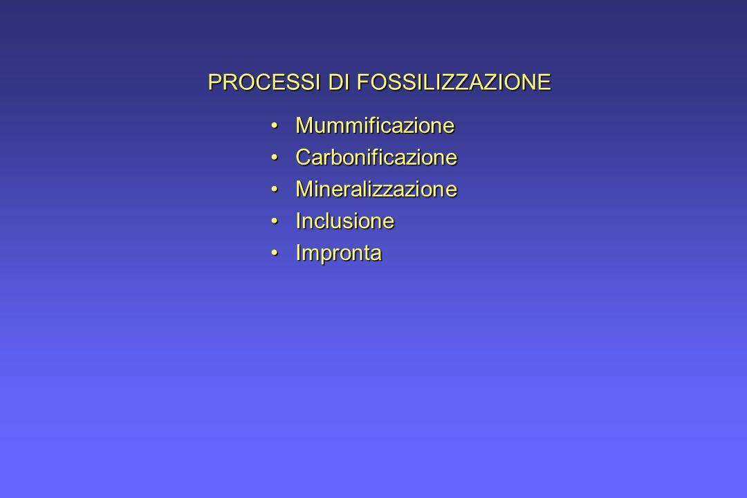 PROCESSI DI FOSSILIZZAZIONE MummificazioneMummificazione CarbonificazioneCarbonificazione MineralizzazioneMineralizzazione InclusioneInclusione Impron