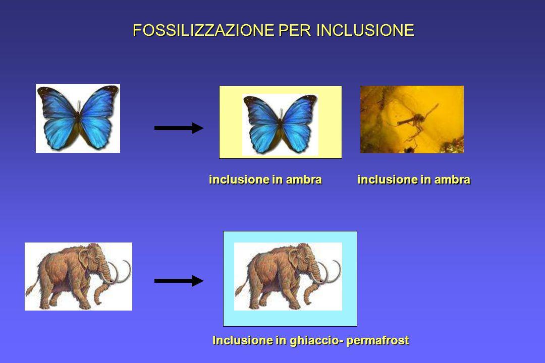 FOSSILIZZAZIONE PER INCLUSIONE inclusione in ambra Inclusione in ghiaccio- permafrost inclusione in ambra