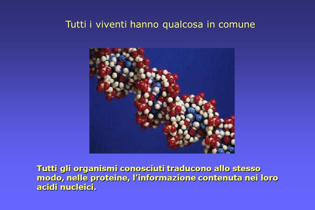 Tutti gli organismi conosciuti traducono allo stesso modo, nelle proteine, linformazione contenuta nei loro acidi nucleici. Tutti i viventi hanno qual