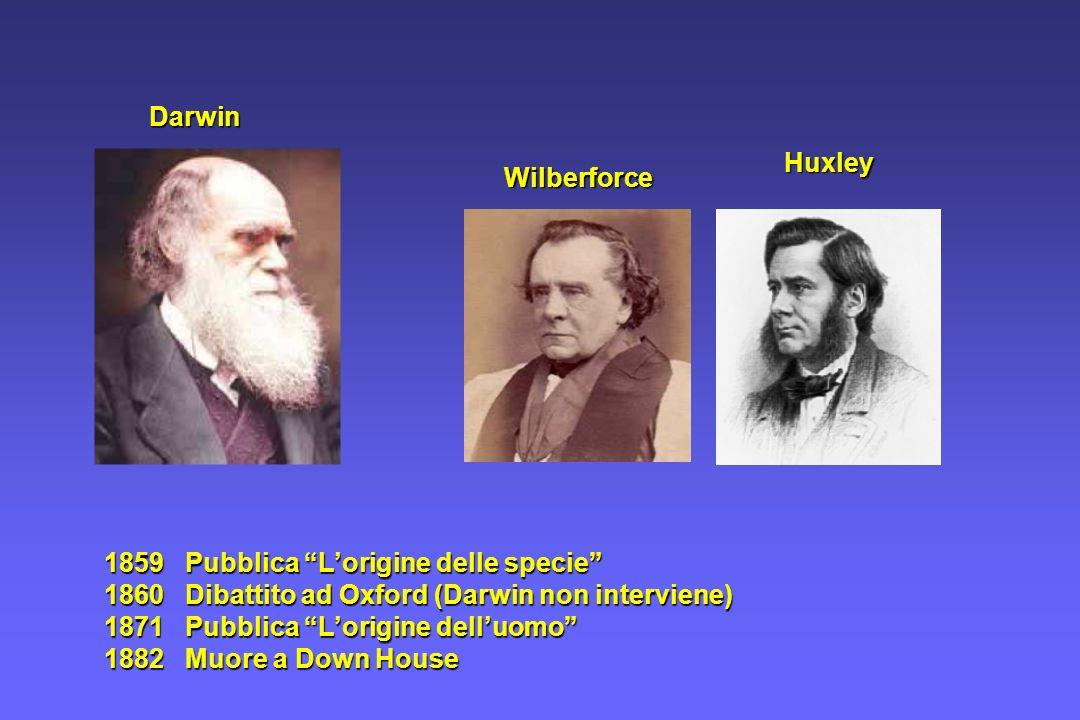 1859 Pubblica Lorigine delle specie 1860 Dibattito ad Oxford (Darwin non interviene) 1871 Pubblica Lorigine delluomo 1882 Muore a Down House Huxley Wi
