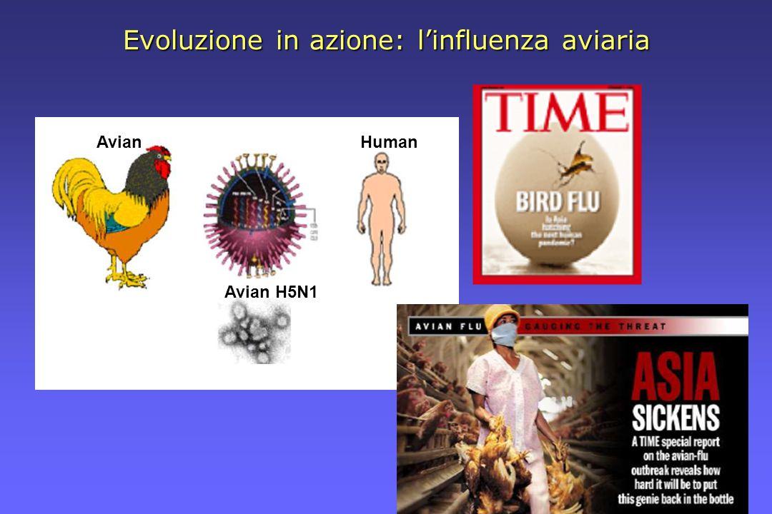 Evoluzione in azione: linfluenza aviaria Avian Avian H5N1 Human