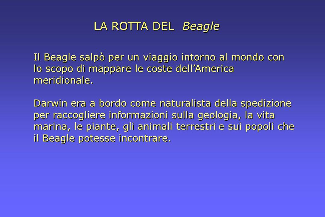 LA ROTTA DEL Beagle Il Beagle salpò per un viaggio intorno al mondo con lo scopo di mappare le coste dellAmerica meridionale. Darwin era a bordo come