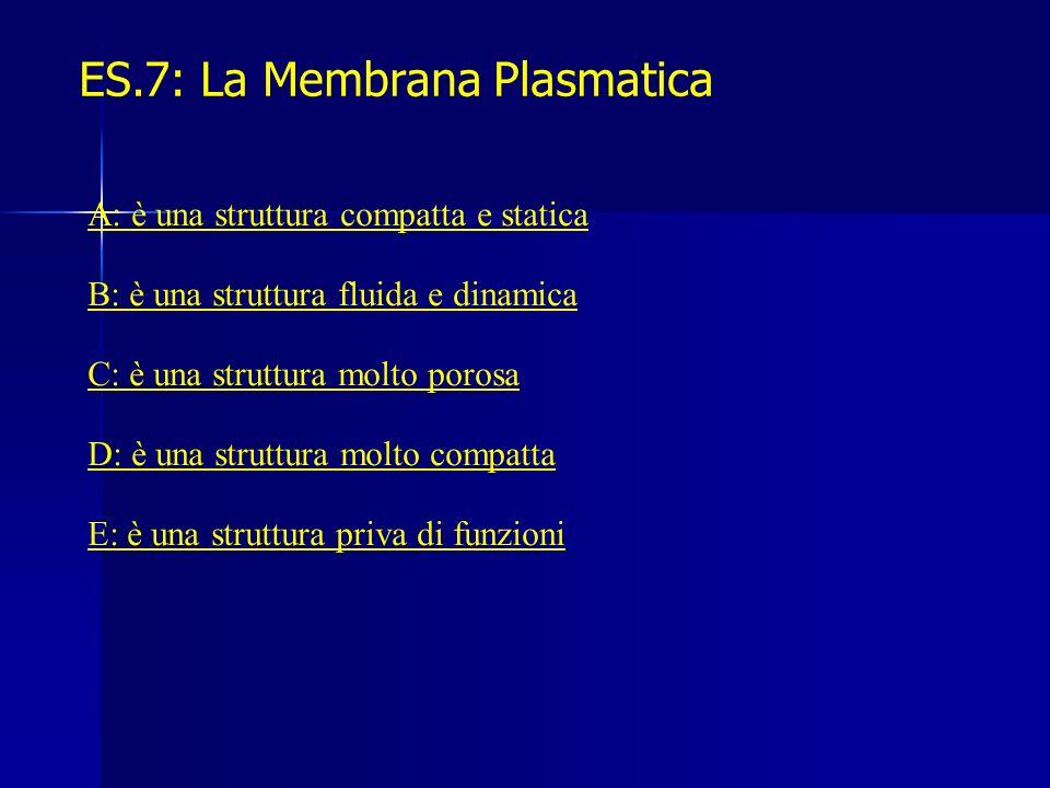 ES.7: La Membrana Plasmatica A: è una struttura compatta e statica B: è una struttura fluida e dinamica C: è una struttura molto porosa D: è una strut