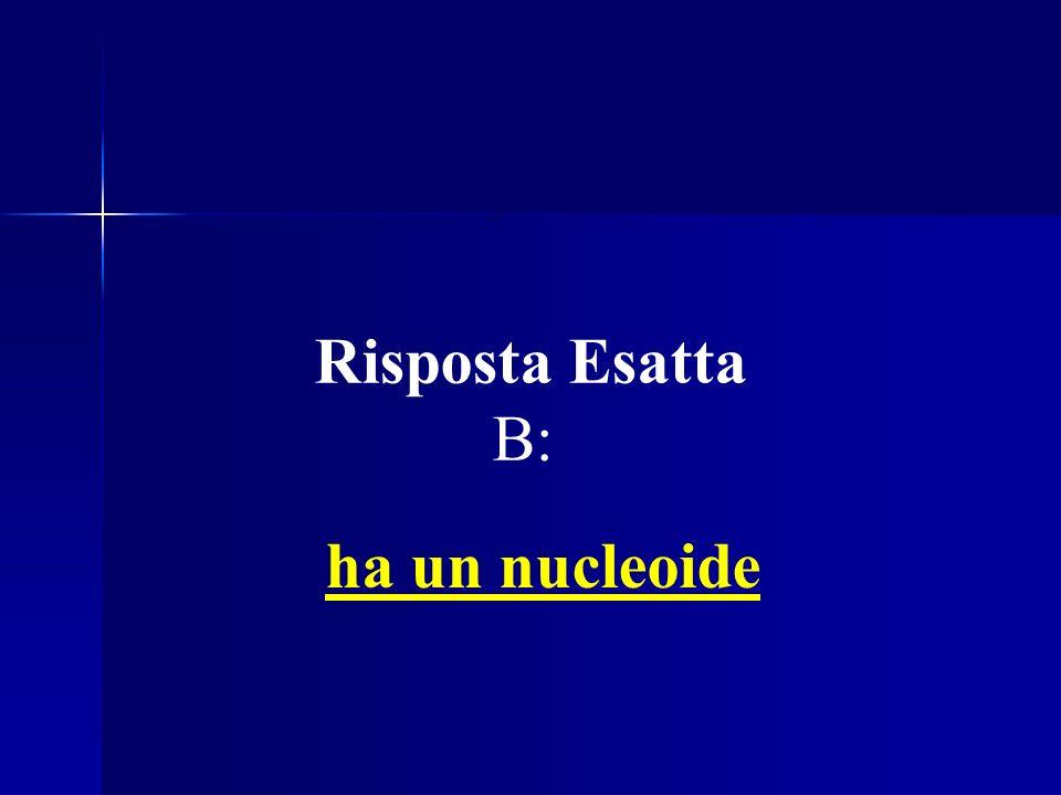 Es. 4: Un organismo Procariote Risposta Esatta B: ha un nucleoide