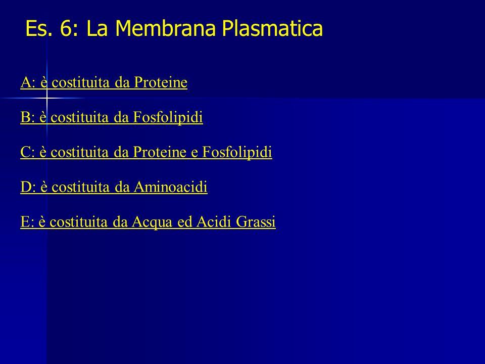 Es. 6: La Membrana Plasmatica A: è costituita da Proteine B: è costituita da Fosfolipidi C: è costituita da Proteine e Fosfolipidi D: è costituita da