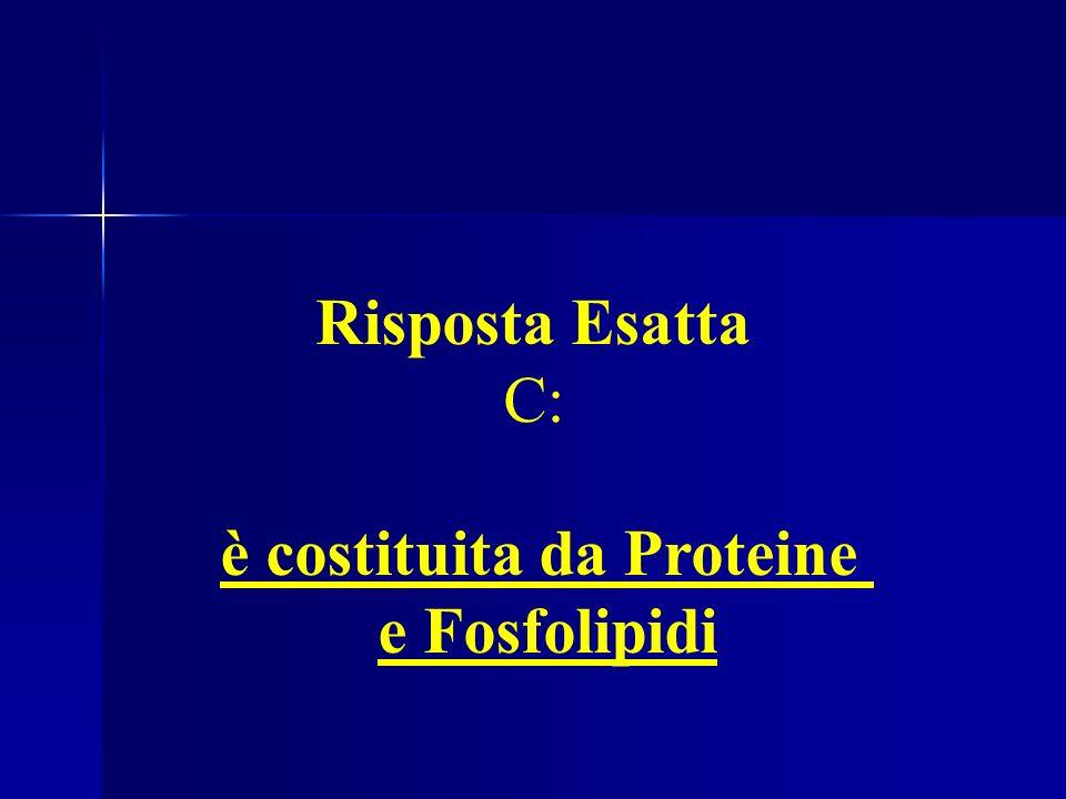 Es. 6: La Membrana Plasmatica è costituita da Proteine e Fosfolipidi Risposta Esatta C: