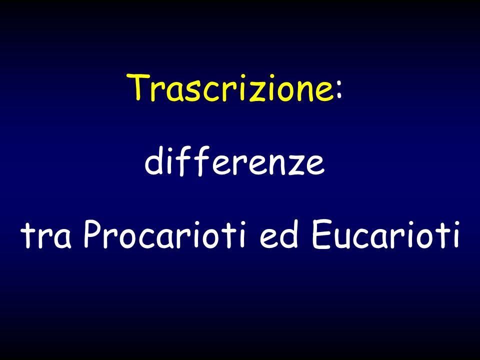 Trascrizione: differenze tra Procarioti ed Eucarioti