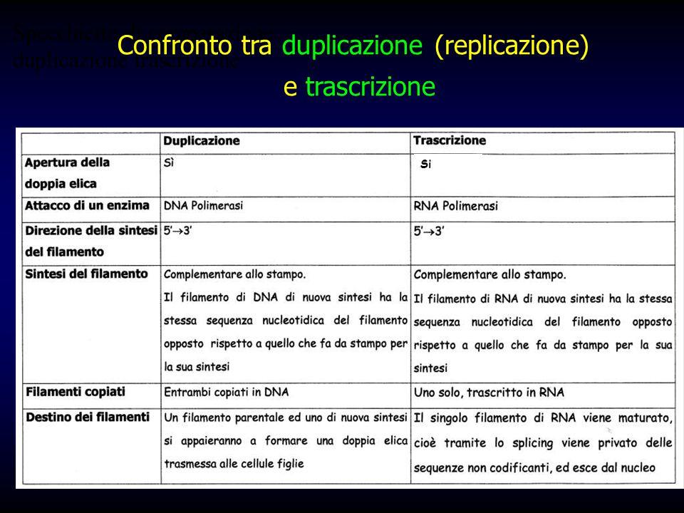Specchietto di comparazione duplicazione trascrizione Confronto tra duplicazione (replicazione) e trascrizione Si