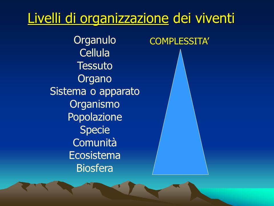 Livelli di organizzazione dei viventi Organulo Cellula Tessuto Organo Sistema o apparato Organismo Popolazione Specie Comunità Ecosistema Biosfera COM