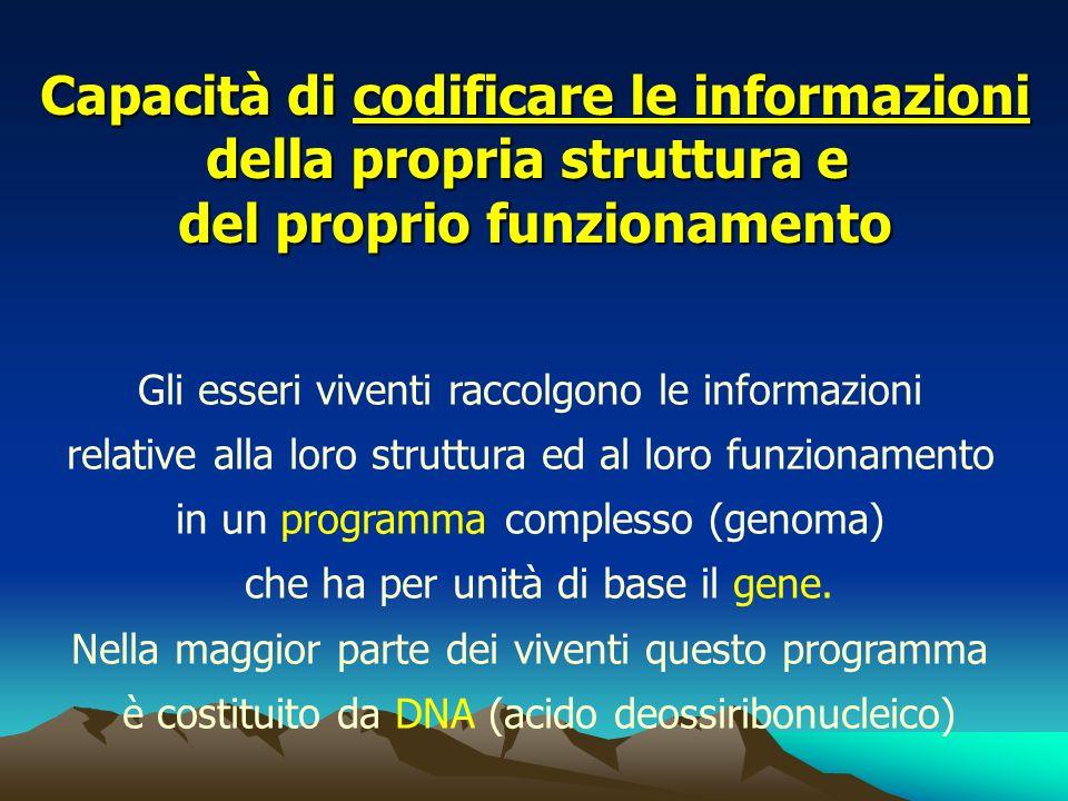 Capacità di codificare le informazioni della propria struttura e del proprio funzionamento Gli esseri viventi raccolgono le informazioni relative alla