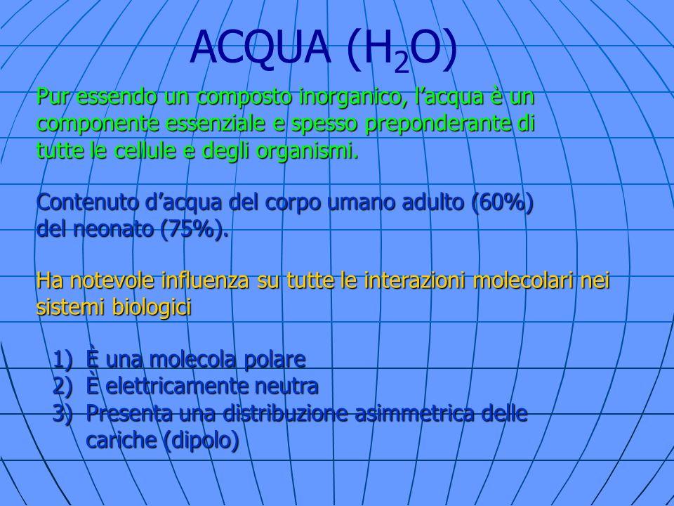 ACQUA (H 2 O) Ha notevole influenza su tutte le interazioni molecolari nei sistemi biologici 1)È una molecola polare 2)È elettricamente neutra 3)Prese