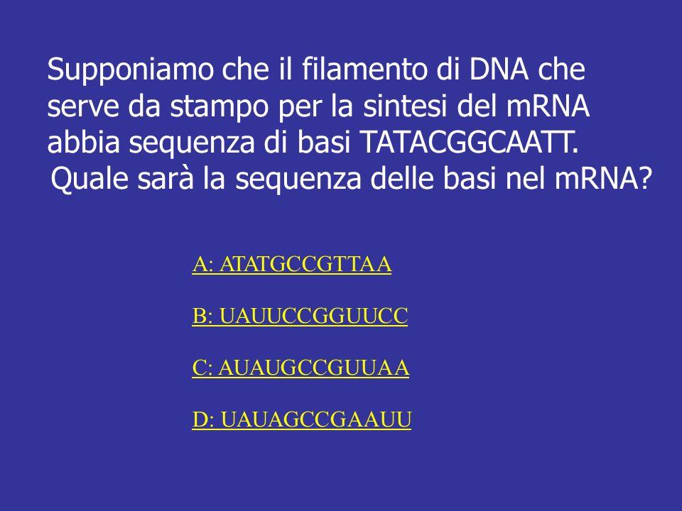 Supponiamo che il filamento di DNA che serve da stampo per la sintesi del mRNA abbia sequenza di basi TATACGGCAATT. Quale sarà la sequenza delle basi