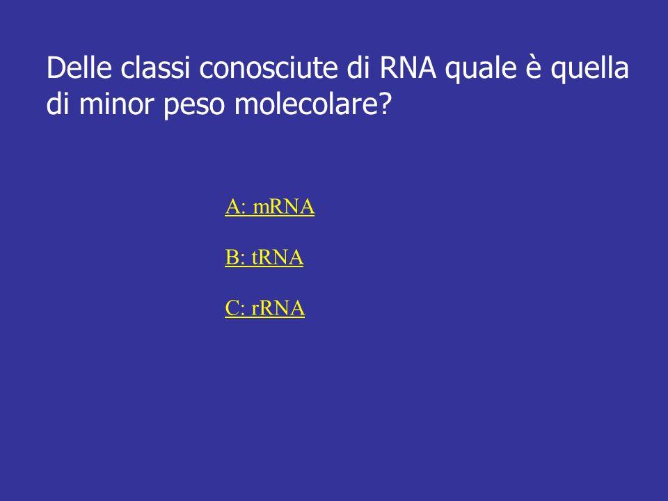 Delle classi conosciute di RNA quale è quella di minor peso molecolare? A: mRNA B: tRNA C: rRNA