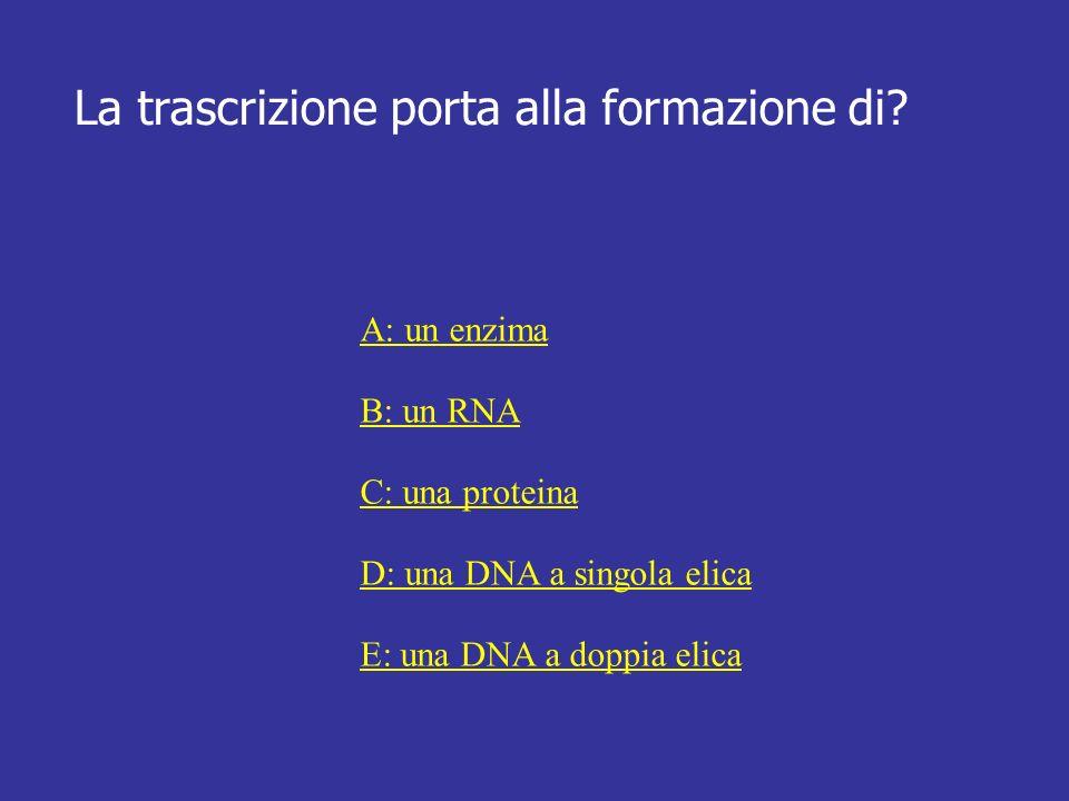 La trascrizione porta alla formazione di? A: un enzima B: un RNA C: una proteina D: una DNA a singola elica E: una DNA a doppia elica
