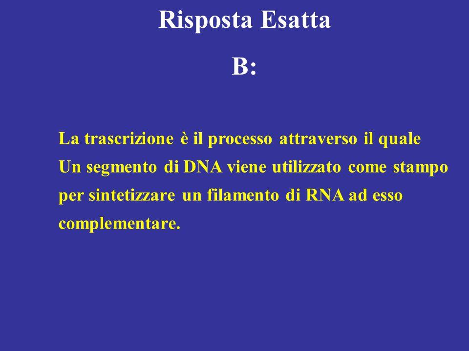 Risposta Esatta B: La trascrizione è il processo attraverso il quale Un segmento di DNA viene utilizzato come stampo per sintetizzare un filamento di