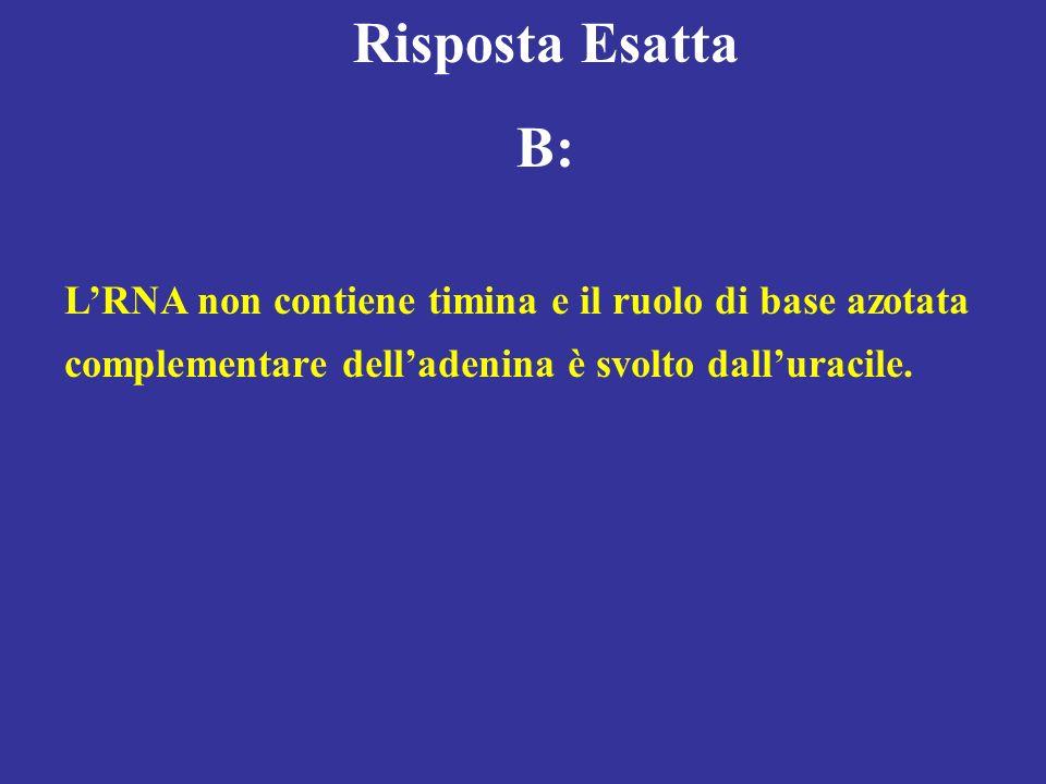 Risposta Esatta B: LRNA non contiene timina e il ruolo di base azotata complementare delladenina è svolto dalluracile.