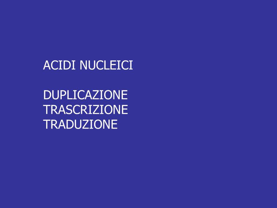 ACIDI NUCLEICI DUPLICAZIONE TRASCRIZIONE TRADUZIONE