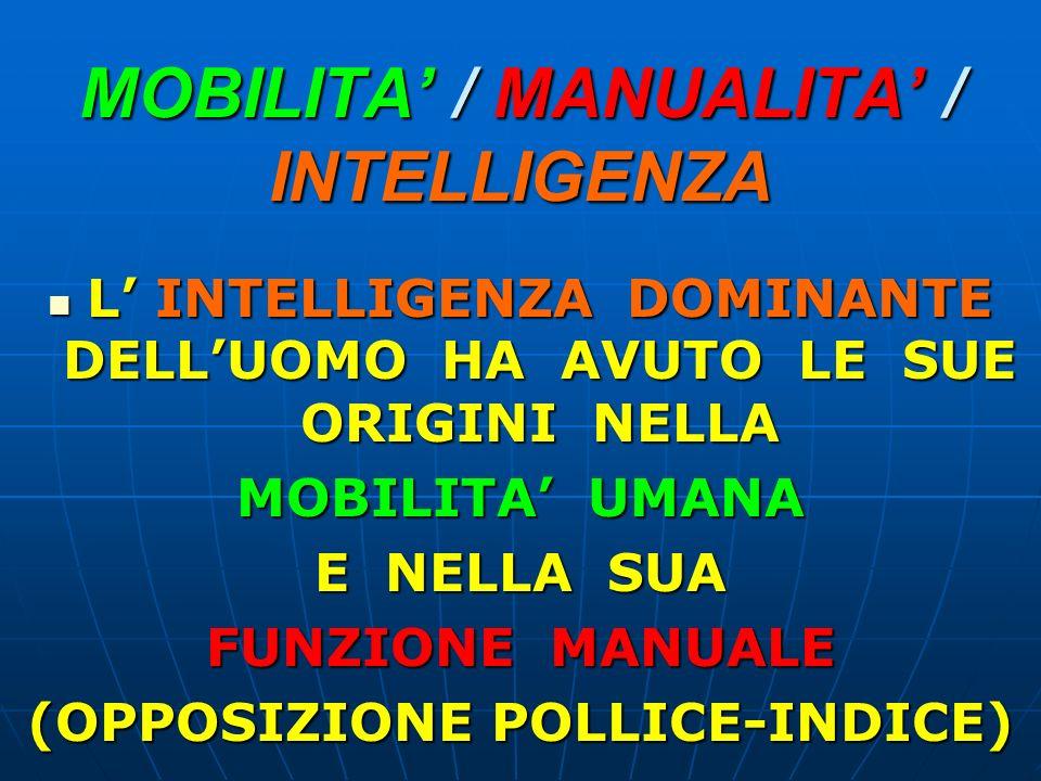 MOBILITA / MANUALITA / INTELLIGENZA L INTELLIGENZA DOMINANTE DELLUOMO HA AVUTO LE SUE ORIGINI NELLA L INTELLIGENZA DOMINANTE DELLUOMO HA AVUTO LE SUE ORIGINI NELLA MOBILITA UMANA E NELLA SUA FUNZIONE MANUALE (OPPOSIZIONE POLLICE-INDICE)