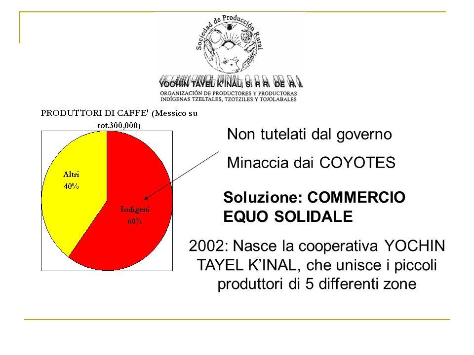Non tutelati dal governo Minaccia dai COYOTES Soluzione: COMMERCIO EQUO SOLIDALE 2002: Nasce la cooperativa YOCHIN TAYEL KINAL, che unisce i piccoli p