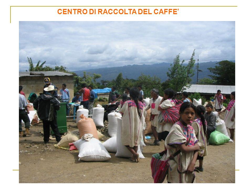 CENTRO DI RACCOLTA DEL CAFFE