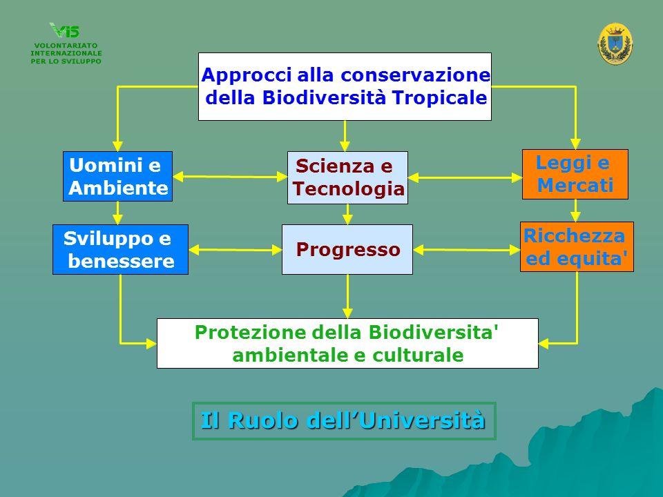 Il Ruolo dellUniversità Approcci alla conservazione della Biodiversità Tropicale Uomini e Ambiente Scienza e Tecnologia Leggi e Mercati Sviluppo e ben
