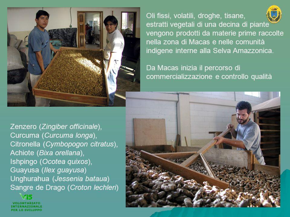 Zenzero (Zingiber officinale), Curcuma (Curcuma longa), Citronella (Cymbopogon citratus), Achiote (Bixa orellana), Ishpingo (Ocotea quixos), Guayusa (