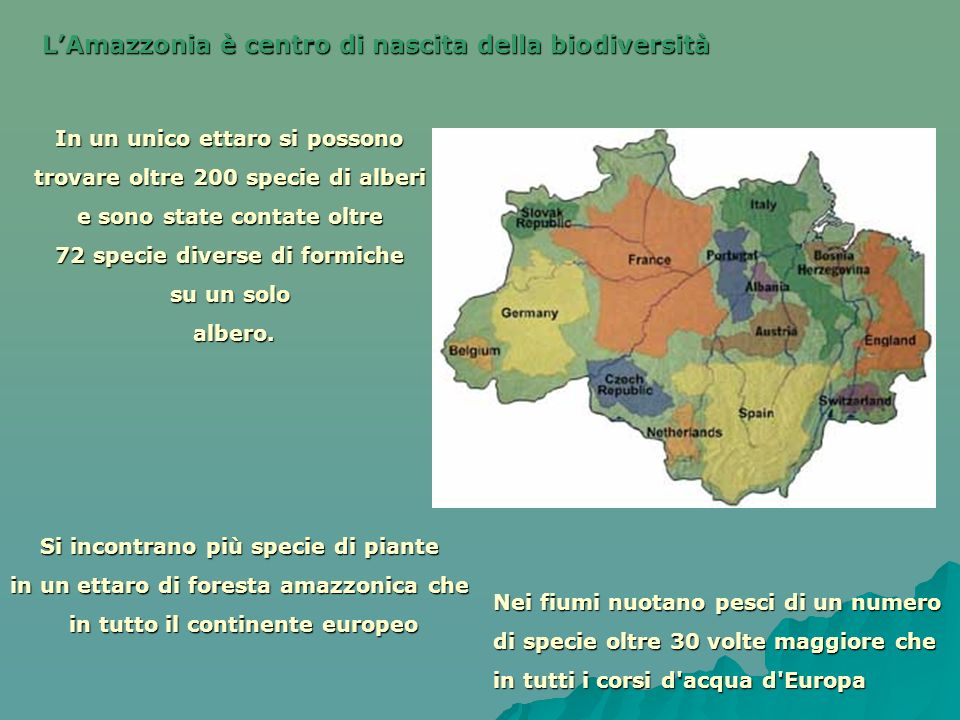 LAmazzonia è centro di nascita della biodiversità Si incontrano più specie di piante in un ettaro di foresta amazzonica che in tutto il continente eur