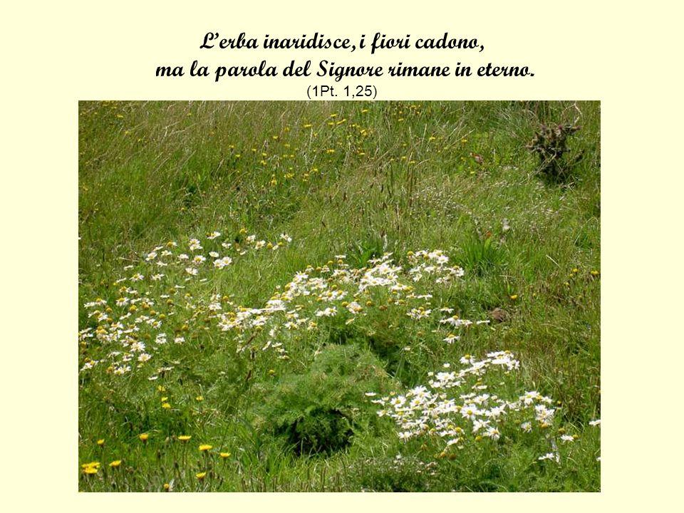 Lerba inaridisce, i fiori cadono, ma la parola del Signore rimane in eterno. (1Pt. 1,25)