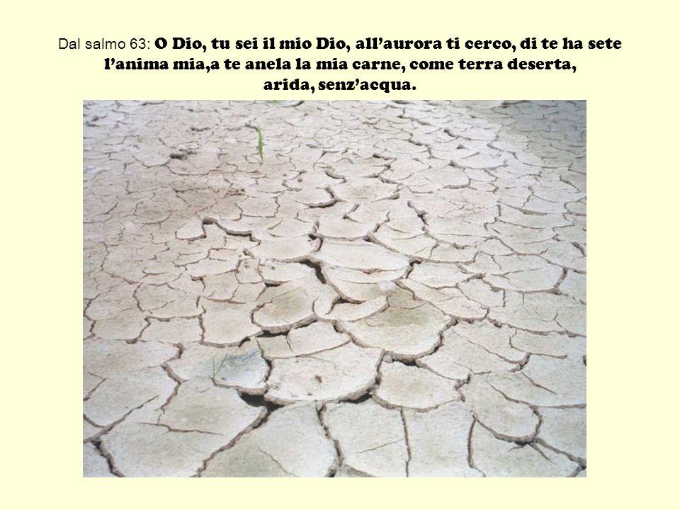 Dal salmo 63: O Dio, tu sei il mio Dio, allaurora ti cerco, di te ha sete lanima mia,a te anela la mia carne, come terra deserta, arida, senzacqua.