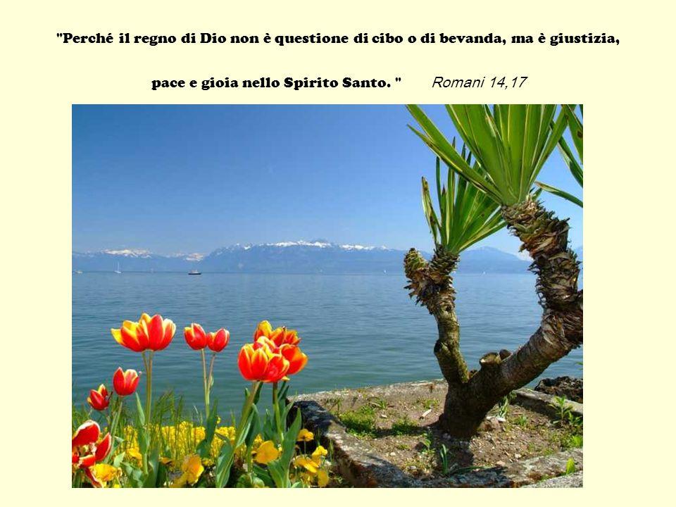 «Il regno dei cieli si può paragonare a un granellino di senapa, che un uomo prende e semina nel suo campo.