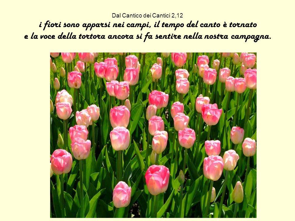 Dal Cantico dei Cantici 2,12 i fiori sono apparsi nei campi, il tempo del canto è tornato e la voce della tortora ancora si fa sentire nella nostra ca