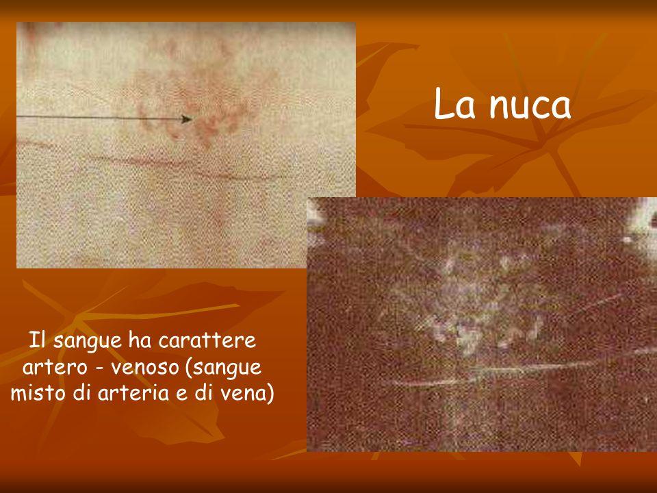 Il sangue ha carattere artero - venoso (sangue misto di arteria e di vena) La nuca