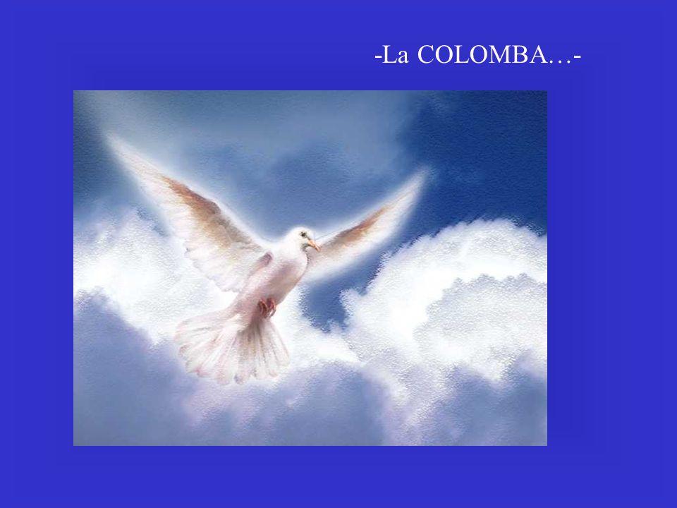 -La COLOMBA…-
