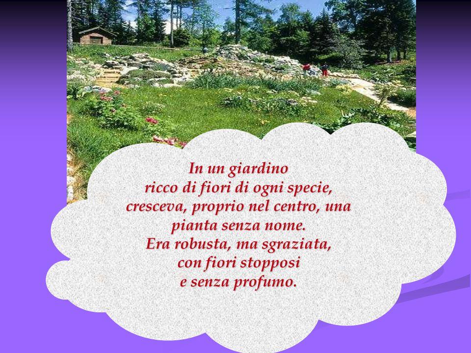 In un giardino ricco di fiori di ogni specie, cresceva, proprio nel centro, una pianta senza nome. Era robusta, ma sgraziata, con fiori stopposi e sen