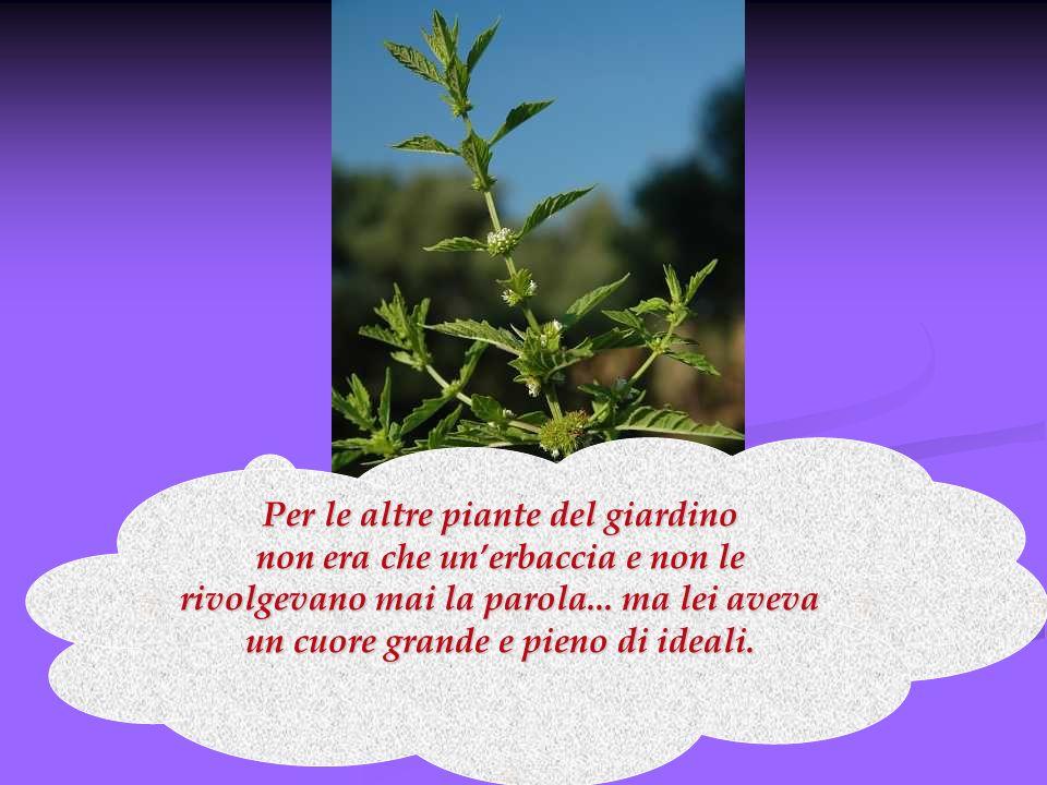 Per le altre piante del giardino non era che unerbaccia e non le rivolgevano mai la parola... ma lei aveva un cuore grande e pieno di ideali.
