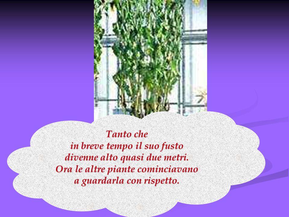 Tanto che in breve tempo il suo fusto divenne alto quasi due metri. Ora le altre piante cominciavano a guardarla con rispetto.