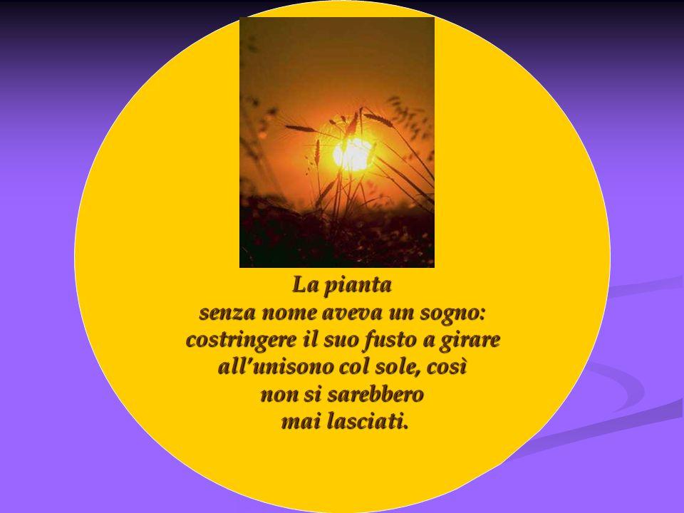 La pianta senza nome aveva un sogno: costringere il suo fusto a girare allunisono col sole, così non si sarebbero mai lasciati. mai lasciati.