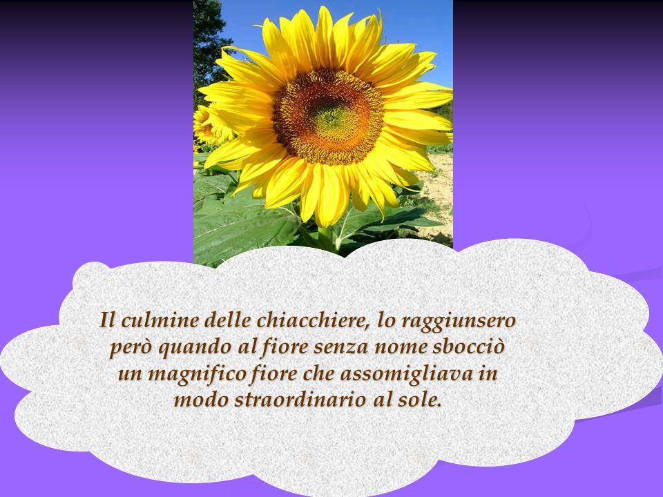 Il culmine delle chiacchiere, lo raggiunsero però quando al fiore senza nome sbocciò un magnifico fiore che assomigliava in modo straordinario al sole