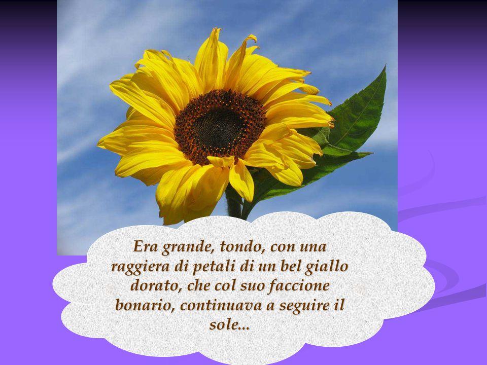 Era grande, tondo, con una raggiera di petali di un bel giallo dorato, che col suo faccione bonario, continuava a seguire il sole...
