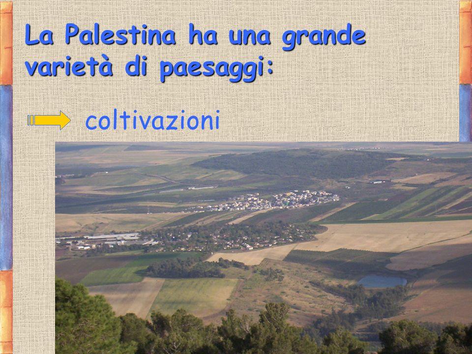 La Palestina ha una grande varietà di paesaggi: coltivazioni