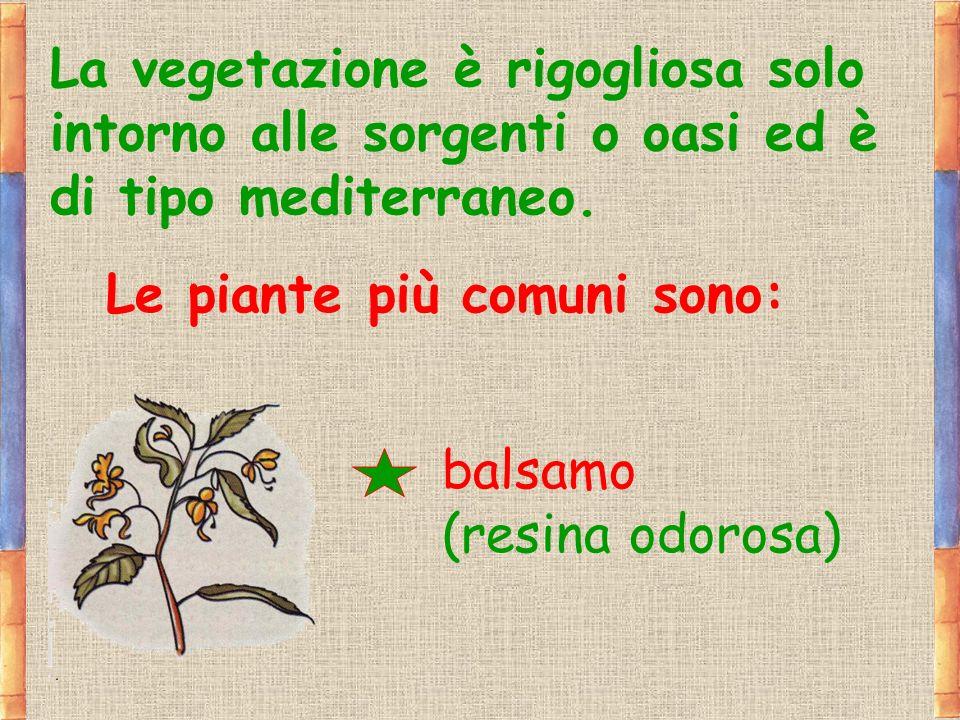 La vegetazione è rigogliosa solo intorno alle sorgenti o oasi ed è di tipo mediterraneo. Le piante più comuni sono: balsamo (resina odorosa)