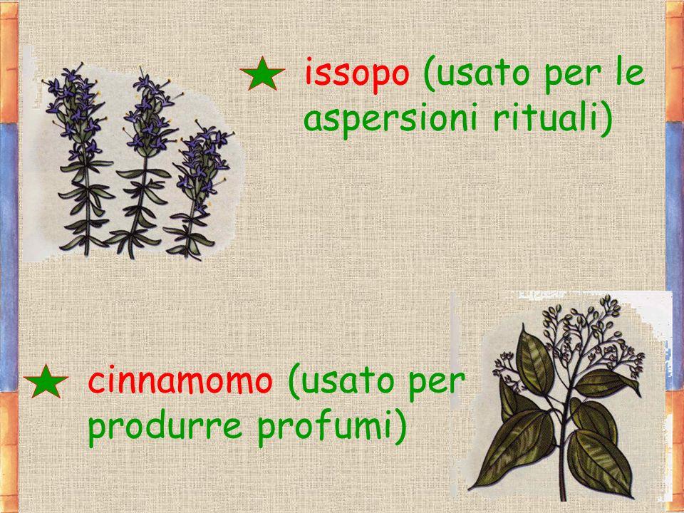 issopo (usato per le aspersioni rituali) cinnamomo (usato per produrre profumi)