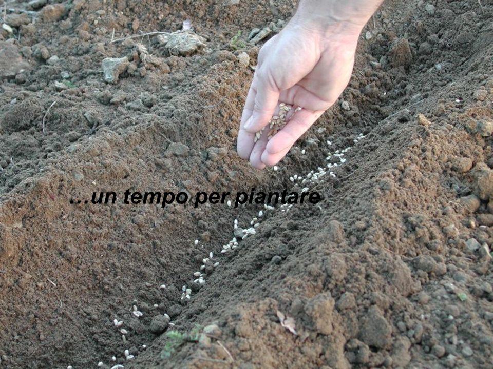 …un tempo per piantare
