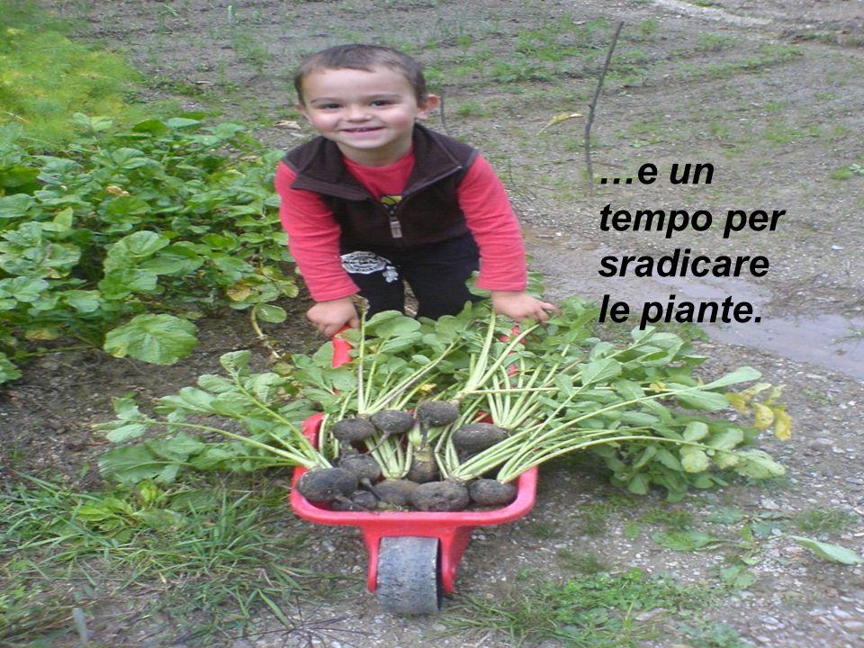 …e un tempo per sradicare le piante.