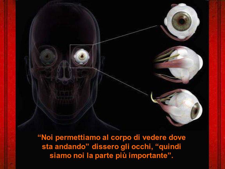 Noi permettiamo al corpo di vedere dove sta andando dissero gli occhi, quindi siamo noi la parte più importante.