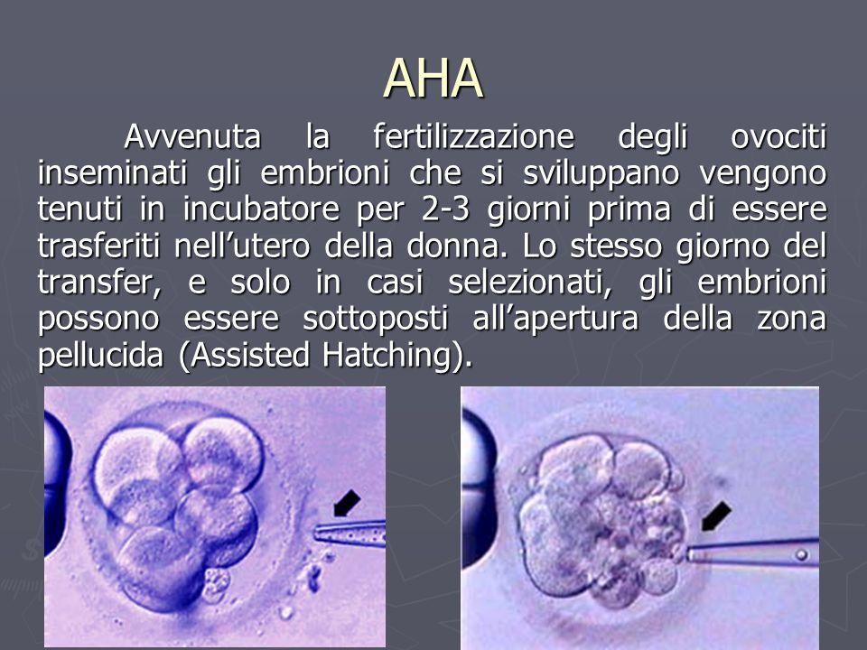 AHA Avvenuta la fertilizzazione degli ovociti inseminati gli embrioni che si sviluppano vengono tenuti in incubatore per 2-3 giorni prima di essere tr