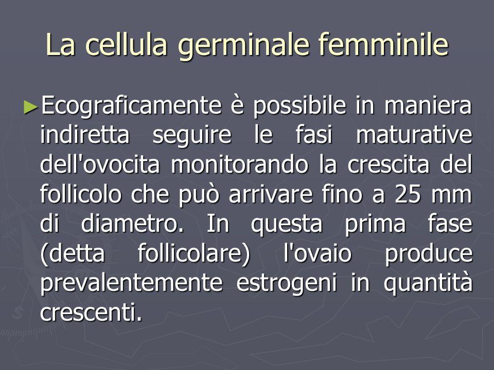 La cellula germinale femminile Ecograficamente è possibile in maniera indiretta seguire le fasi maturative dell'ovocita monitorando la crescita del fo